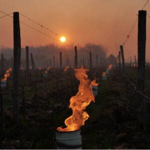 protección contra el frío de la viña lucha contra la escarcha en los viñedos