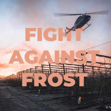 techniques to fight against frost
